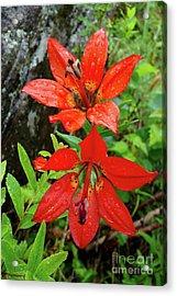 Superior Wood Lilies Acrylic Print
