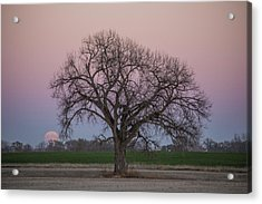 Supermoon Rise Acrylic Print by Aaron J Groen