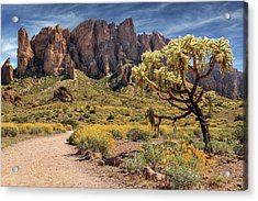 Superstition Mountain Cholla Acrylic Print by James Eddy
