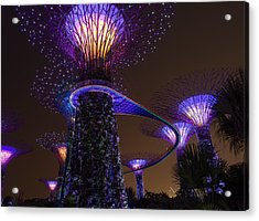 Supertrees Acrylic Print