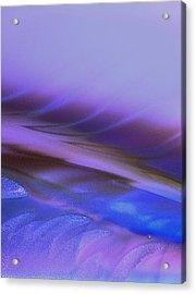 Suraf Acrylic Print by Sheep McTavish