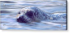 Surfacing Seal Acrylic Print
