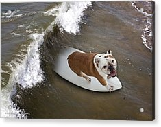 Surfer Dog Acrylic Print