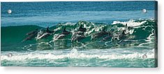Surfing Dolphins 4 Acrylic Print