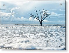 Surfside Tree Acrylic Print by Phyllis Peterson