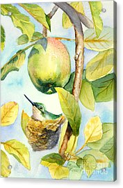 Surprise In The Apple Tree Acrylic Print