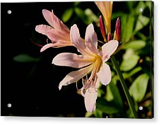 Surprise Lilly Acrylic Print by Martin Morehead