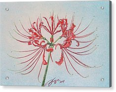 Surprise Lily Acrylic Print by Beverly Fuqua