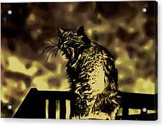 Surreal Cat Yawn Acrylic Print by Gina O'Brien