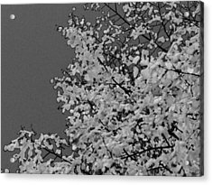 Surreal Deconstruction Of Fall Foliage In Noir Acrylic Print