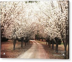 Dreamy Dogwood Trees South Carolina - Spring Blossom Trees South Carolina Acrylic Print