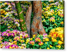 Surrounded Acrylic Print by Az Jackson