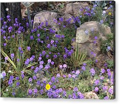 Surrounded By Purple Flowers Acrylic Print