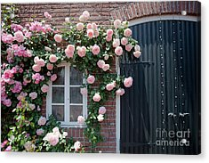 Surrounded By Roses Acrylic Print