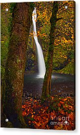 Surrounded By The Season Acrylic Print by Mike  Dawson