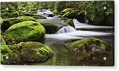 Surrounded In Green Acrylic Print