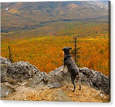 Surveying Autumn Acrylic Print