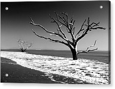Acrylic Print featuring the photograph Survivor by Dana DiPasquale