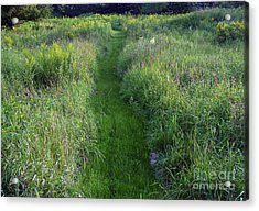 Susan's Meadow Acrylic Print by Georgia Sheron