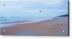 Suspended  Acrylic Print by Cheryl Waugh Whitney