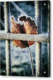 Suspended Acrylic Print by Karen Stahlros