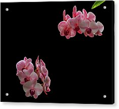 Suspended Orchids Acrylic Print