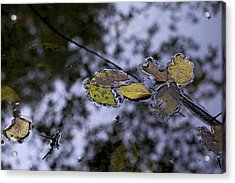 Suspension Acrylic Print by Jane Eleanor Nicholas