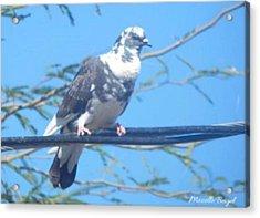 Suspicious Bird Acrylic Print