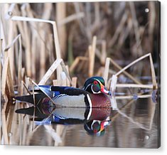 Acrylic Print featuring the photograph Suspicious by Gerry Sibell