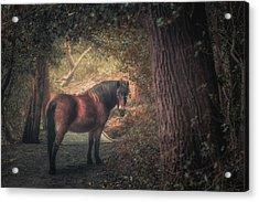 Sutton Pony Acrylic Print by Chris Fletcher