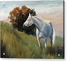 Suzie  Arabian Horse Portrait Painting Acrylic Print by Kim Corpany