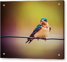 Acrylic Print featuring the photograph Swallow by Mary Hone