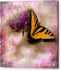 Swallow Tail Full Of Beauty Acrylic Print