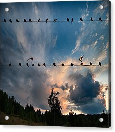 Acrylic Print featuring the photograph Swallows by Vladimir Kholostykh