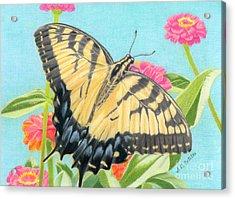 Swallowtail Butterfly And Zinnias Acrylic Print by Sarah Batalka