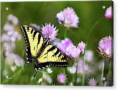 Swallowtail Butterfly Dream Acrylic Print by Christina Rollo