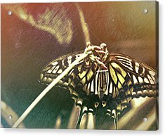 Swallowtail Acrylic Print by JAMART Photography