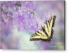 Swallowtail On Purple Flowers Acrylic Print