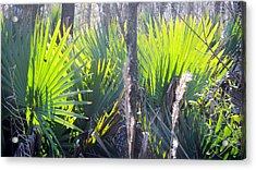 Swamp Art Acrylic Print