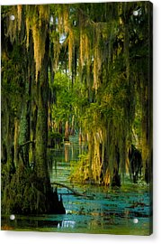 Swamp Curtains In May Acrylic Print