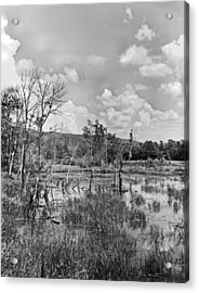 Swamp Acrylic Print by Curtis J Neeley Jr