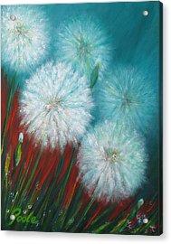 Swamp Dandelions Acrylic Print