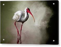 Swamp Days Acrylic Print