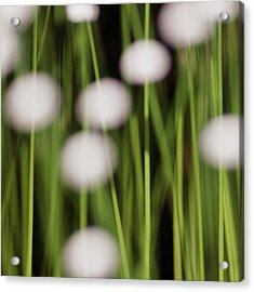 Swamp Flowers Acrylic Print