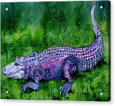 Swamp Gator Acrylic Print by Maria Barry