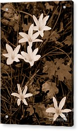 Swamp Lily Acrylic Print