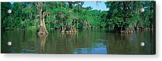 Swamp, Louisiana Acrylic Print by Panoramic Images