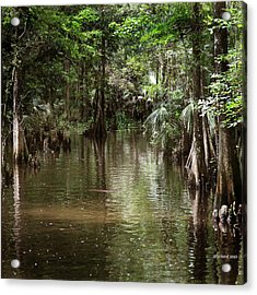 Swamp Road Acrylic Print