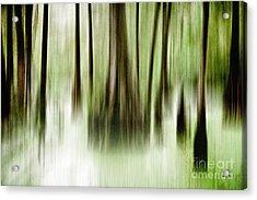 Swamp Acrylic Print by Scott Pellegrin