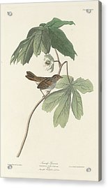 Swamp Sparrow Acrylic Print by Rob Dreyer